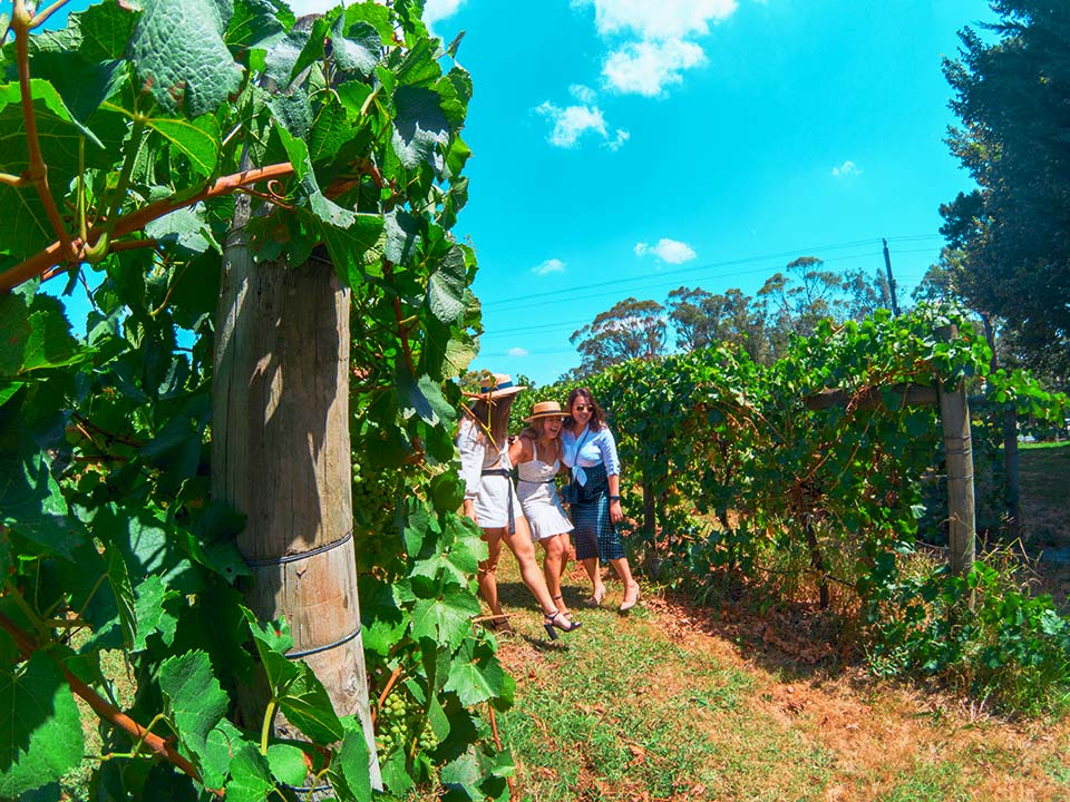 Cheap Winery Tours Yarra Valley
